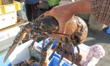 Ragout de homard de l'Ile de Sein !