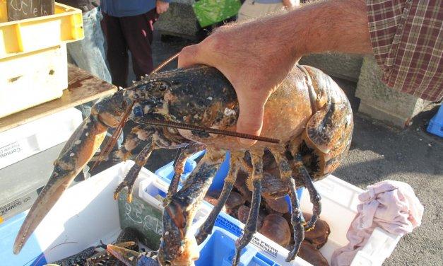 Comment cuisiner le ragout de homard de l'Ile de Sein !