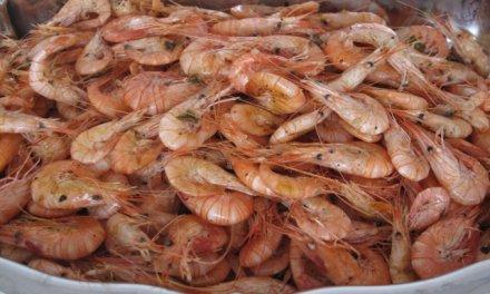 Crevettes «Bouquet» cuisson «sauté»