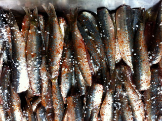 Marinade et plancha de poisson