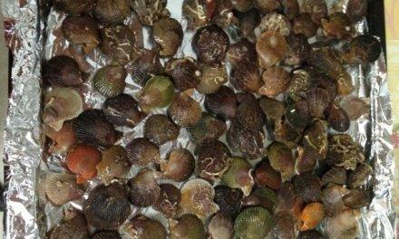 Pétoncles cuites au naturel (four)