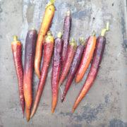 carottes au cumin
