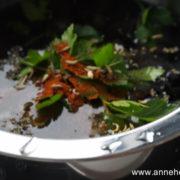bigorneau / graines de fenouil et piment