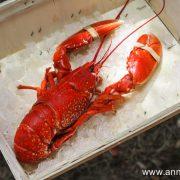 homard cuit au court bouillon